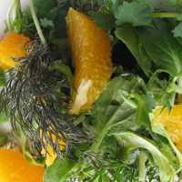 Vegane Köstlichkeit Wildkräutersalat